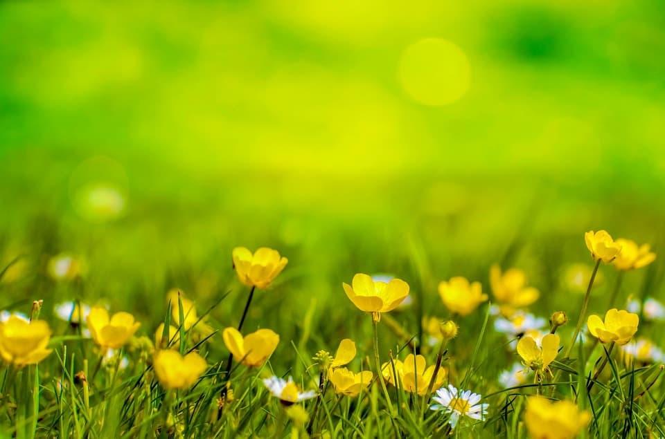 Springtime in Midlothian