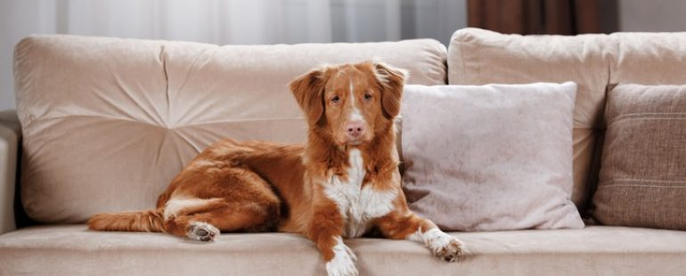 Best Furniture Fabric for Pet Owners