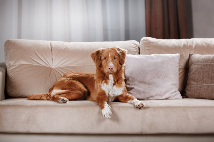 Furniture fabric for dog owners