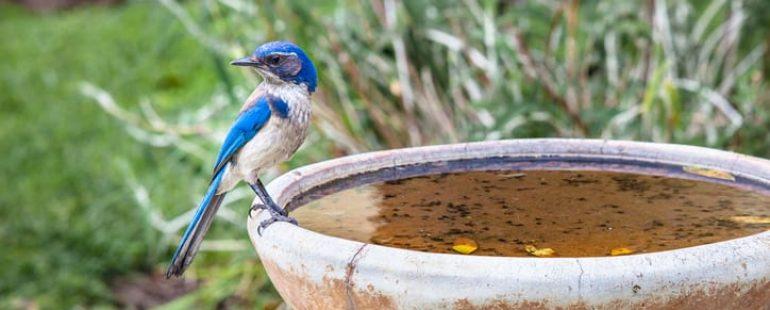 Inviting Wildlife Into Your Backyard